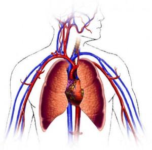 kardiosistem