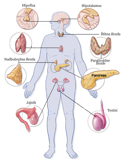 endokrinisistem