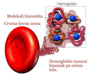 Kako izlečiti anemiju?