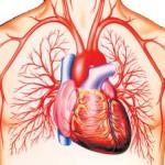 holesterol-hypocol