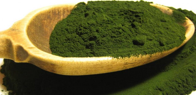 chlorella_powder