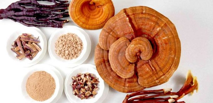 medicinske-gljive