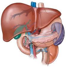 Terapija virusnog hepatitisa