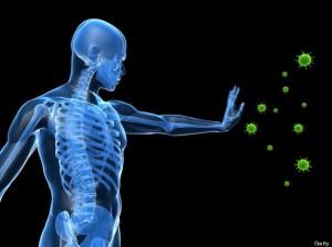 kako funkcionise imuni sistemm